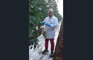 Toma de  muestras para análisis de residuos de pesticidas